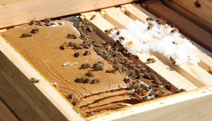 To Bee or Not To Bee; Benefits of Beekeeping, with Osama Idlibi
